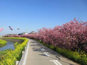 田原市ここちeeハウス菜の花・桜まつり